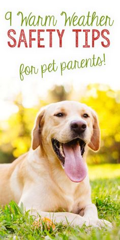 Follow these guidelines and tips to keep your dogs safe, cool, and having fun all summer long!