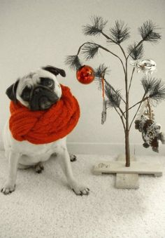 Cozy Christmas pug..im so doing this for my xmas card next year