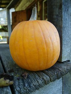 Great Pumpkin! on Pinterest | Pumpkins, Pumpkin Patches and Pumpkin ...