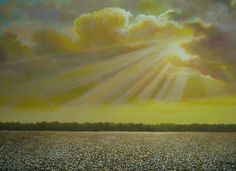 Cotton field at sunset.  Most people would be surprised to know that fresh cotton has the best smell ever!
