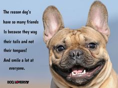 Is your dog as happy as he can be? Read our tips for giving your pet a happy, healthy life. Happy Dog Meme, Happy Dogs, Happy Dog Cleveland, Happy Dog Grooming, Healthy Pets, Happy Healthy, Healthy Life, French Dogs, Smiling Dogs