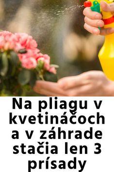 Lens, Gardening, Lawn And Garden, Klance, Lentils, Horticulture
