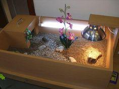 Criamos lindos Terrarios para filhotes de jabutis aceitamos cartoes