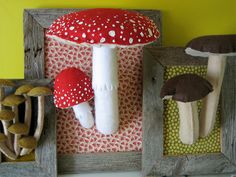 new mushrooms Por kitty bee
