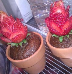 """Tiny cakes baked in flower pots with strawberry """"flowers""""."""