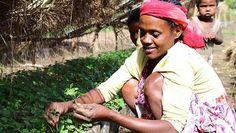 El proyecto, con una inversión de 6 millones de francos suizos, ayudará a más de 40.000 pequeños caficultores de varias regiones de Etiopía y Kenia, ofreciéndoles apoyo técnico y financiero para para aumentar la resistencia de sus plantaciones ante el cambio climático.