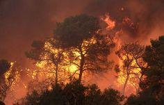 Fire fumes wild in the Carmel Forest near Haifa, Israel