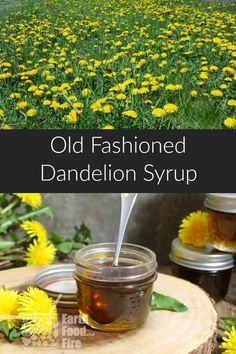 Try Your Hand At Foraging With This Dandelion Syrup Recipe. Extraordinary On Pancakes, Waffles, And In Tea, This Is Something You Won't Find In Store Via Earthfoodandfire Dandelion Recipes, Dandelion Jam Recipe, Dandelion Jelly, Edible Wild Plants, Flower Food, Wild Edibles, Medicinal Herbs, Edible Flowers, Canning Recipes