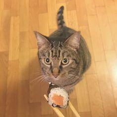 My Sushi Cat