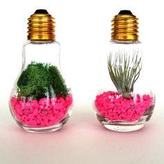 Weekend Project Alert: 20 DIY Terrariums to Inspire You