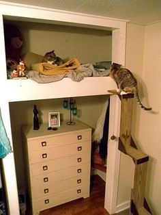 Cat loft! #cats #CatShelves #CatCondo