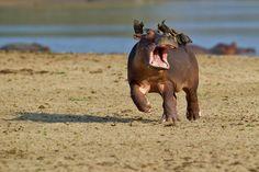 올해의 가장 웃기는 야생 동물 사진 대회 우승작들