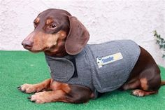 Dachshund Anxiety Shirt applies a gentle, constant pressure that has a dramatic calming effect for over 80% of dogs that are anxious, fearful or over-excited. Most effective anxiety solution as voted by Veterinarians. Great for storms, separation, travel and many other anxieties. Use ThunderShirt for: Fear of thunder, storms, barking problems, any noise, separation, car or travel, excitability or crate anxiety, general fearfulness and more.