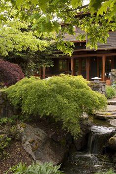 création de jardin japonais aménagé avec des érables du Japon à feuilles vertes et rouges et une petite cascade