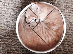 gatos-proporcao-aurea (12)