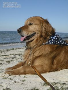 Austin at the Beach by Sapphire Dream Photography