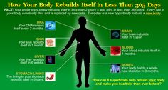How Your Body Rebuilds Itself in Less than 365 Days