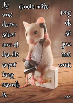 Goeie More, Afrikaans Quotes, Good Morning, Qoutes, Funny Pictures, Words, Day, Motivational, Messages