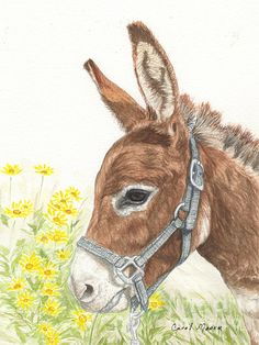 Miniature donkey, Red Satin Doll, watercolor painting by artist Carol Moore. Animal Sketches, Animal Drawings, Art Drawings, Farm Paintings, Animal Paintings, Watercolor Illustration, Watercolor Paintings, Donkey Drawing, Cute Donkey