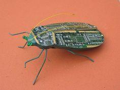 Een echte computer 'bug'!