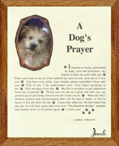 Dog love my dog and prayer on pinterest