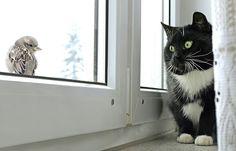 Кот и воробей