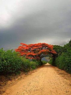 Beyond the Gates of Hell Beautiful World, Beautiful Places, Beautiful Pictures, Landscape Photography, Nature Photography, Nature Sauvage, Tree Forest, Science And Nature, Nature Pictures