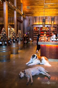 This is precisely why you should never hire dogs to work the tasting room: Bernadette (St. Bernard) and Gus (Yellow Lab) welcoming visitors toLambert Bridge Wineryin Dry Creek Valley, Sonoma.