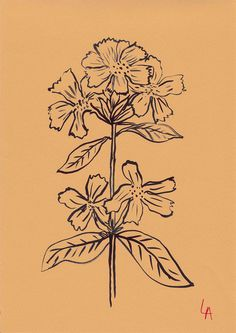 A new show by English artist, Lucy Auge, featuring 500 flowers drawn on vintage papers from the and displayed in a Georgian building in Bath. Plant Illustration, Botanical Illustration, Hippie Art, Crayon, New Artists, Traditional Art, Line Art, Art Photography, Sketches