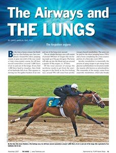 The Horse | The Airways and the Lungs | TheHorse.com