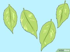 How to Make a Poison Ivy Costume: 14 Steps (with Pictures) Diy Posion Ivy Costume, Poison Ivy Costumes, Diy Costumes, Halloween Costumes, Ivy Plant Indoor, Ivy Look, Ivy Plants, Diy Makeup, Plant Leaves