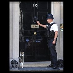 A policeman at 10 Downing Street, the residence of the British Prime Minister performs an important duty: opening the door to let Larry inside. #cats