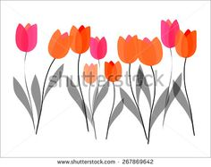Tulips floral illustration on white background