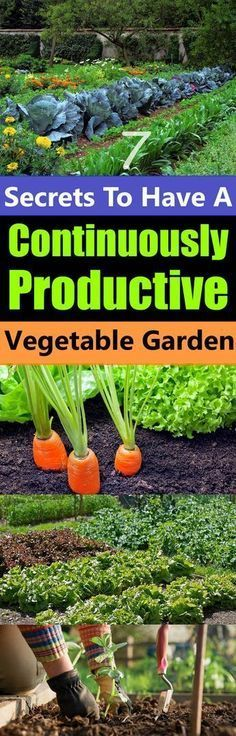7 Secrets To Have A Continuously Productive Vegetable Garden