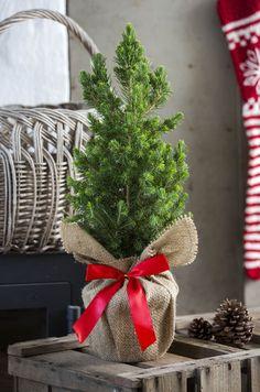 Die 149 Besten Bilder Von Wohn Und Bastel Ideen Rund Um Weihnachten