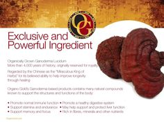 Power of Ganoderma! Can You Find It, Coffee Business, Motivational Quotes For Success, Health Benefits, How To Make Money, Stuffed Mushrooms, Gold, Healthy, Organic