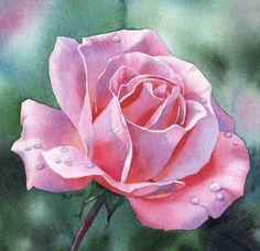 Have you ever seen a watercolour as fresh as this?! Look at the reserved white paper that define the edges of the petals. And then there's the controlled bleeds in the background. I don't think it's possible to control watercolours any better than this.