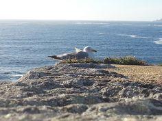Seagull IV by lwessman, via Flickr