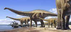 Diplodocus est l'un des plus célèbres dinosaures. C'était un animal aux proportions gigantesques qui vivait dans les plaines asséchées d'Amérique du Nord, à la fin du Jurassique. La queue et le cou représentaient l'essentiel de ses 28 mètres de longueur, et l'animal pesait tout de même 15 tonnes, voire plus, soit 3 fois le poids d'un éléphant. Pour soutenir cette lourde charge, il possédait quatre pattes robustes, avec des os solides comme des piliers.