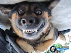 funny pets - Google Search