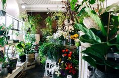 If you're after some fresh, beautiful plants to spice up your home or if you're looking to buy a new house warming present for a close friend or family member, then this is the place for you.