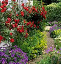 Plants for north facing wall/shady garden