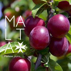 Maltese Plums