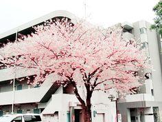 blossom, grunge, pastel, nature, flower