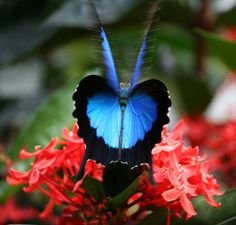 Heart of the Butterfly