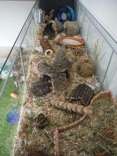 terrarium hamster - Google zoeken forum.dehamster.nl