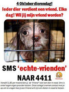 Het is bijna Dierendag! Wil jij een vriend zijn voor een dier in nood?  #dierenleed