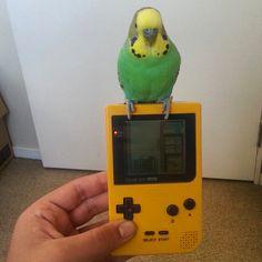 piffzone  #gamer #games #twitch #cod #destiny #megaman #ffxiv #gamergirl #ps4 #xboxone #pc #GTA #me #wow #ps3 #lol #xbox #mario #GTA5 #love #follow #classic #pokemon #sasuke #nintendo #parrot #leagueoflegends #gameboy #callofduty #naruto