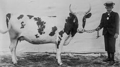 Cow glamour shots: Why Finnish cattle posed for pictures in 1899 Cow Photos, Poses For Pictures, Sweet Cow, Happy Cow, Glamour Shots, Vegan Animals, White Backdrop, Animal 2, World's Fair