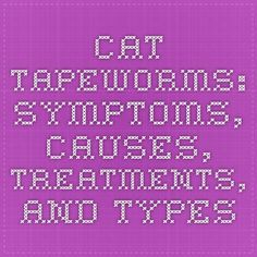 Cat Tapeworms: Symptoms, Causes, Treatments, and Types